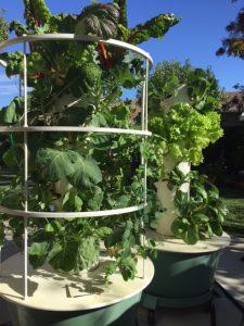 hugh yields for backyard gardens