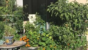 tower-garden