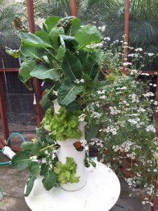 TG kale and cilantro